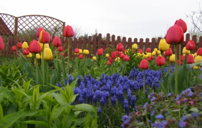 Sådan gør du haven klar til foråret